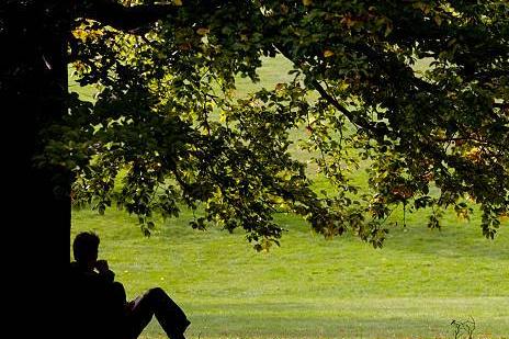 under-a-tree.jpg